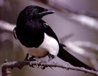 Magpie RSS Reader